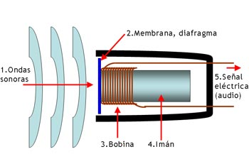 IMAGEN: Fuente http://commons.wikimedia.org/wiki/File:Mic-dynamic.PNG